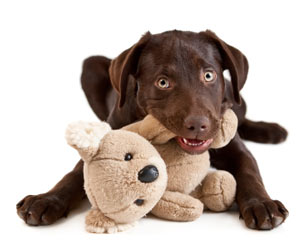 Stop-Your-Dog-From-Chewing